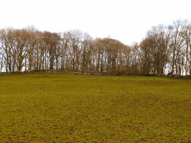 Mulloch Wood