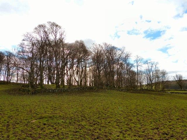 Mulloch Hill