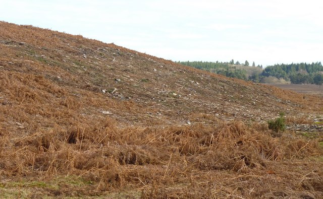 Cleared Plantation in Markway Inclosure