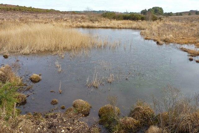 Part of Duckhole Bog
