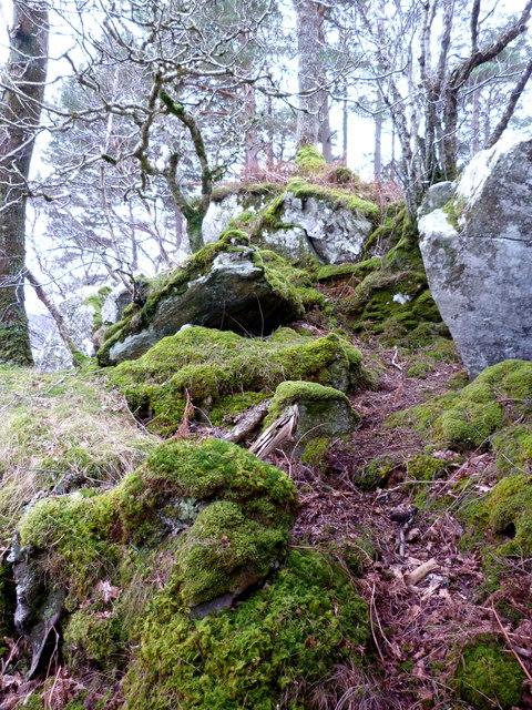 Mossy shore of Loch Sunart