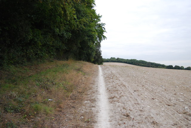 North Downs Way by Shoulder of Mutton Wood