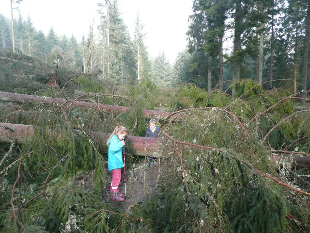 Storm damage on the Pine Cone Point Trail