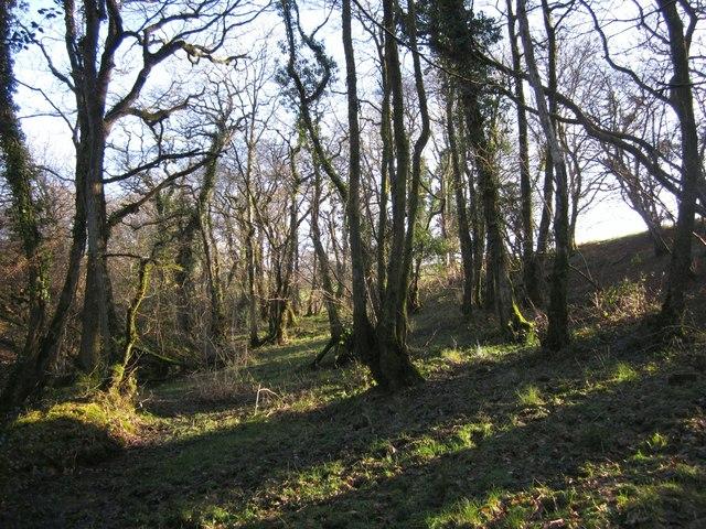 Woodland near Bradaford