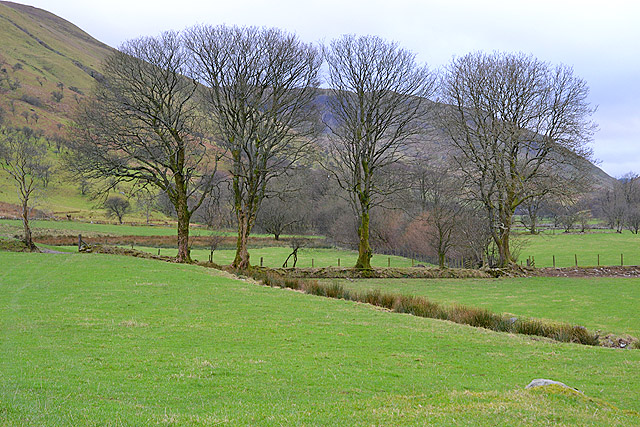 Trees near Blaenycwm