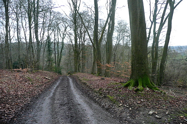 Track in Great Wood