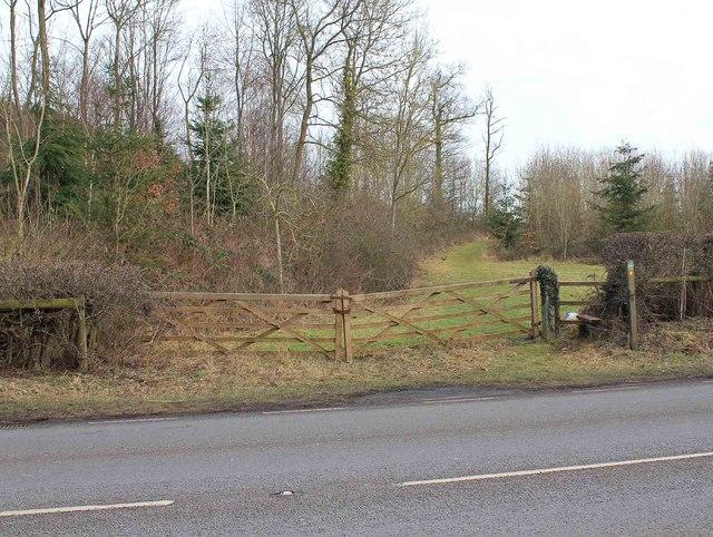 Footpath alongside Austy Wood