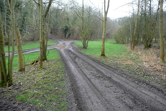 Junction in Hellbottom Wood