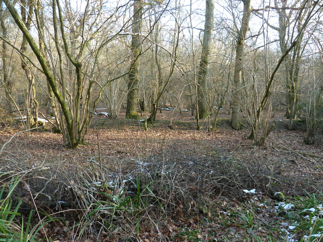 Upperbarn Copse beside Oldhouse Lane