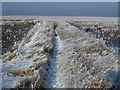 TF4033 : The Wash coast in winter - Narrow foot path to the wilderness by Richard Humphrey