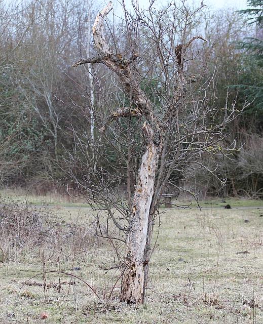Woodpecker radio, St Wulstans Nature Reserve