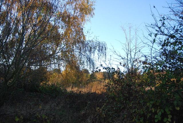 Marshland vegetation