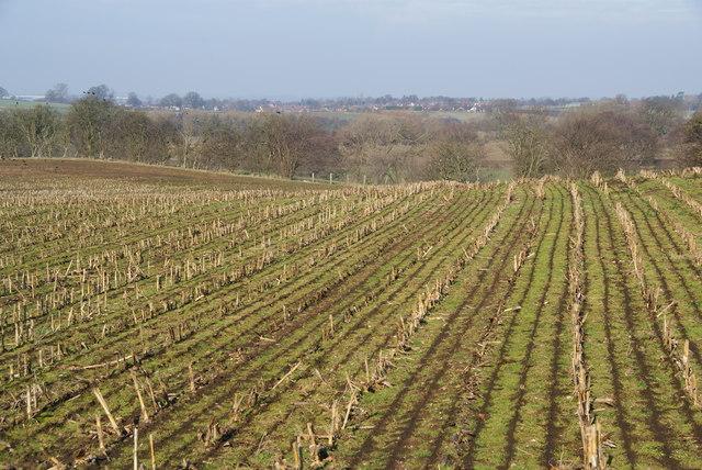 A field of stubble