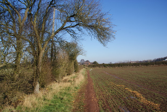 Fruit fall by the path to Brocton