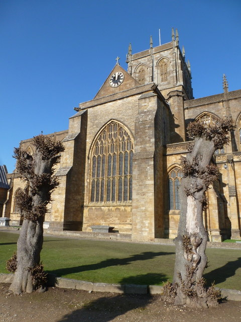 Sherborne: stumpy trees outside the abbey