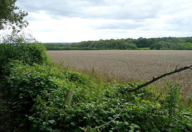 Farmland at Penbury