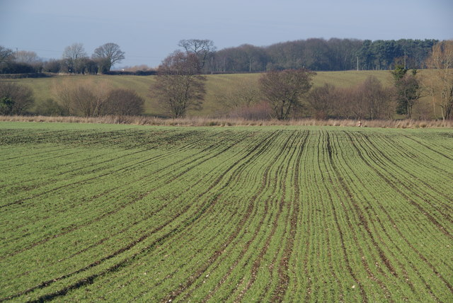 A winter sowing