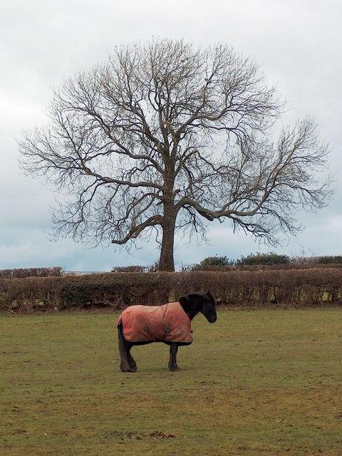 Horse in a field near Harthill
