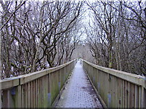 R3586 : Dromore Woods by Geno