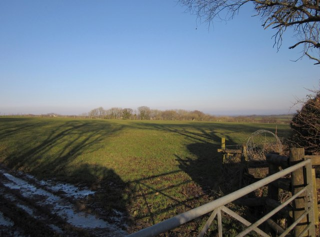 Pasture near Upcott Barton