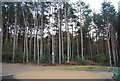 TQ2834 : Conifers, Tilgate Forest by N Chadwick