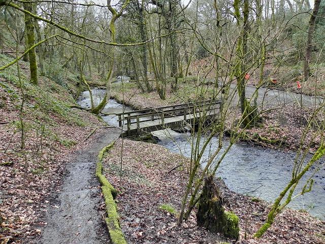 Borsdane Brook, Borsdane Wood