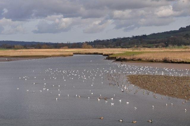 East Devon : The River Axe