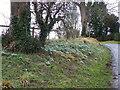 SU0826 : Snowdrops at Throope Manor by Maigheach-gheal