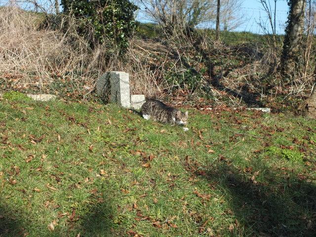 The churchyard cat
