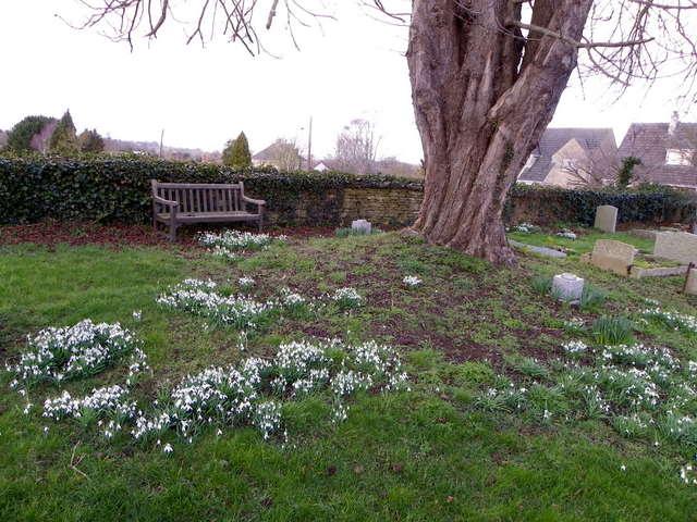 Snowdrops, Marnhull