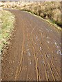 NY6591 : Tyre tracks on the Lakeside Way by Oliver Dixon