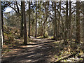 SJ8382 : Styal Estate, Path to the Southern Woods by David Dixon