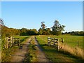 SP6604 : Track and pasture, Great Haseley by Andrew Smith