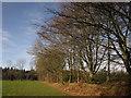 ST0907 : Trees alongside the camp site, Forest Glade by Derek Harper