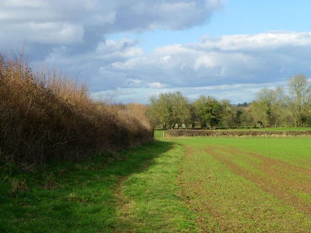 Footpath near Marnhull