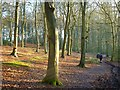 SP8800 : Atkins Wood, Great Missenden by Andrew Smith