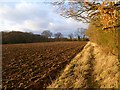 SP9105 : Farmland, Cholesbury by Andrew Smith