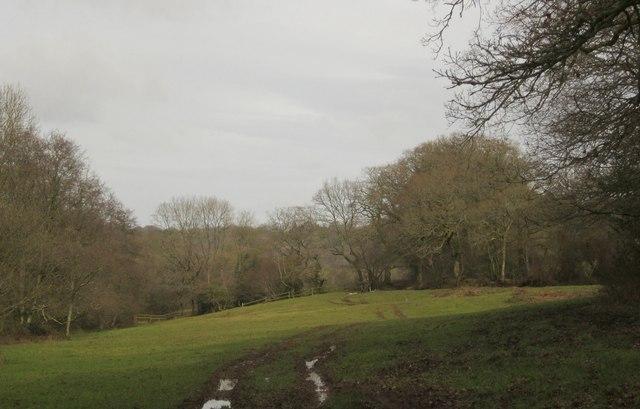 Meadow on Shoot's Lane