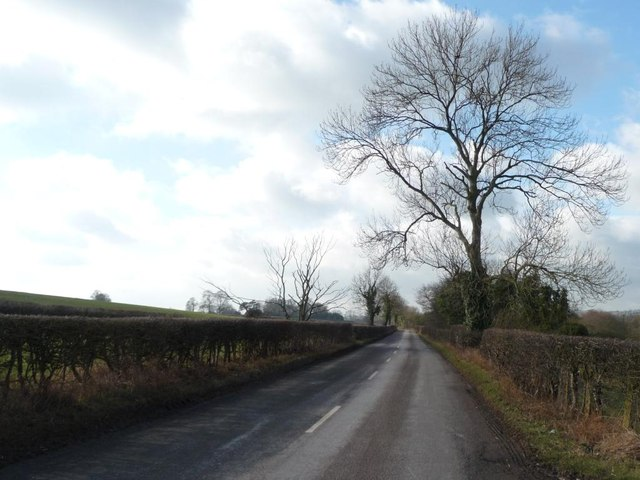 Winter tree on Long Lane
