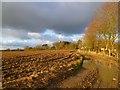 SP9904 : Farmland, Ashley Green by Andrew Smith