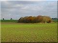 SU0875 : Farmland and copse, Winterbourne Bassett by Andrew Smith