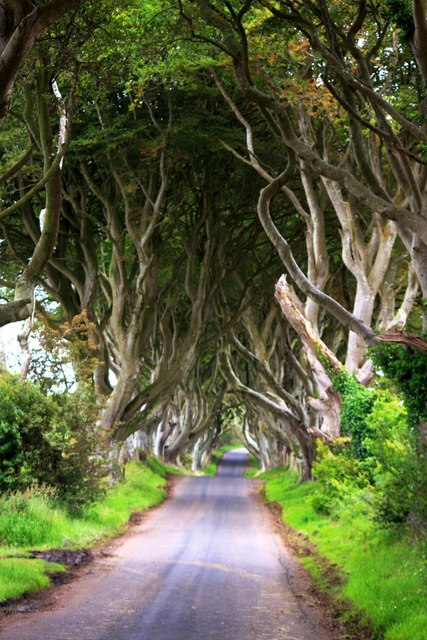 The Dark Hedges, near Armoy © Yvonne Wakefield :: Geograph
