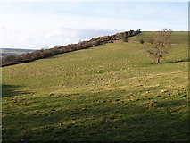 NZ0658 : Apperley Bank by Clive Nicholson