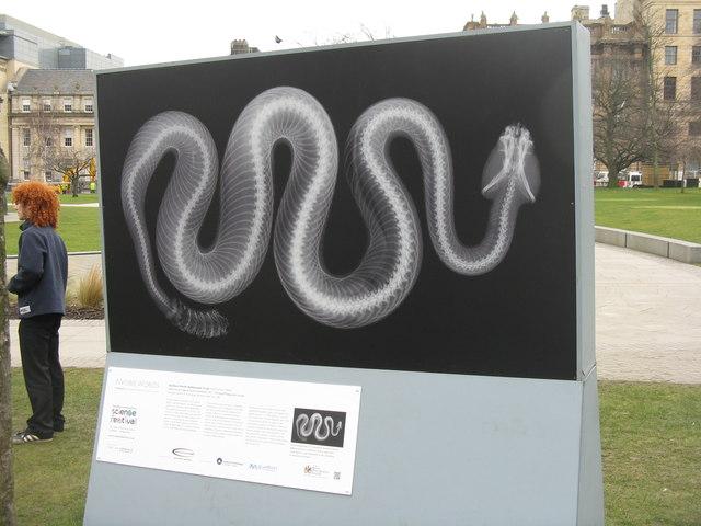 Rattlesnake in St Andrew Square