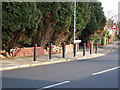 SP0583 : Bollards on Oakfield Road, Selly Park by Phil Champion