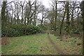 SJ8069 : Big Wood, Lower Withington by Peter Turner