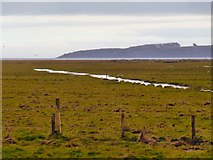 NX4355 : Wigtown Marshes by Andy Farrington