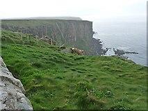 ND2076 : Cliffs, Dunnet Head by Robin Drayton