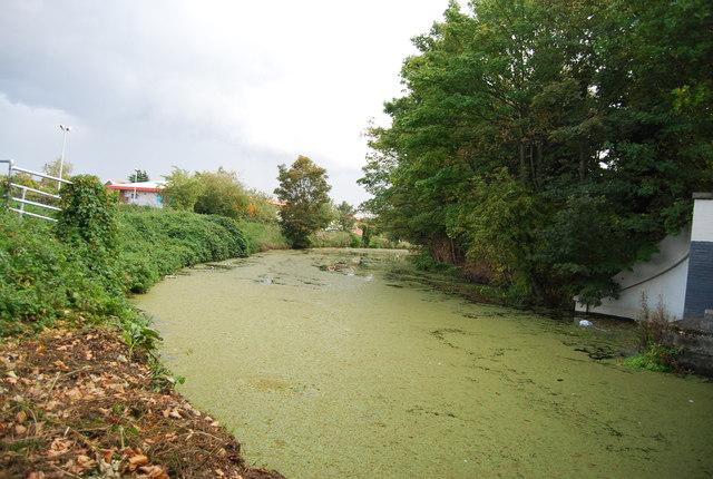 An Algal River Gipping