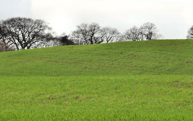 Field near the Giant's Ring, Belfast (4)